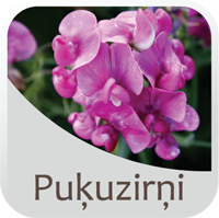 pukjuzirnji icon